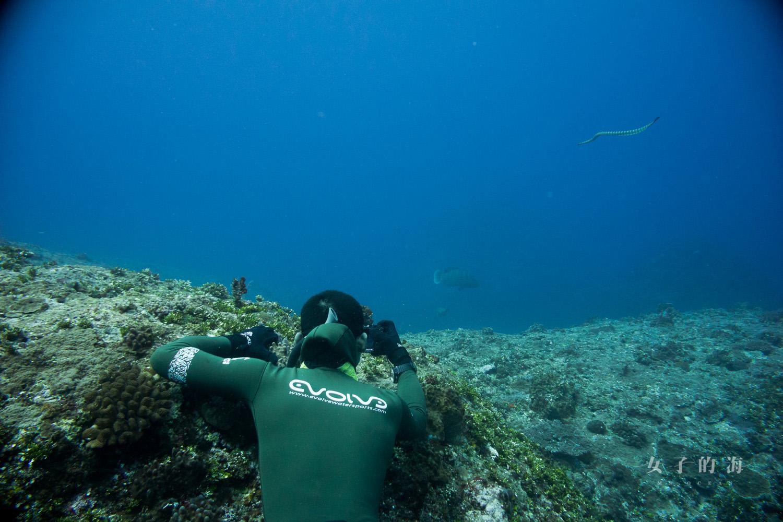 蘭嶼龍王鯛