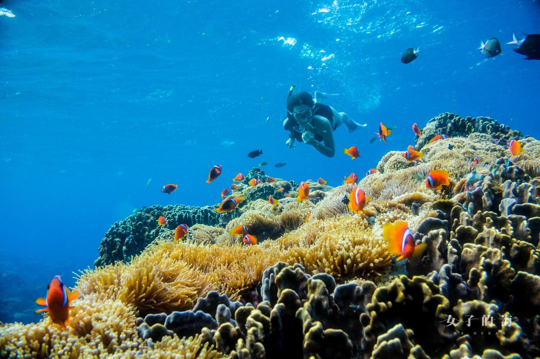 母雞岩小丑魚