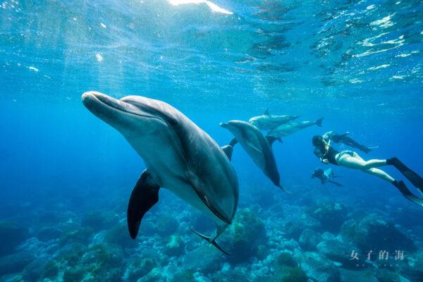 御藏島海豚