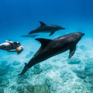 環太平洋自由潛水泳池賽