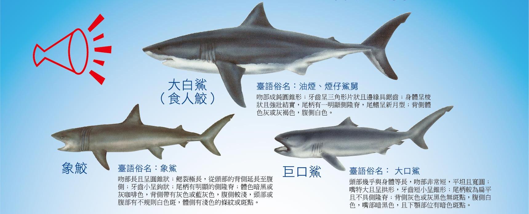 大白鯊象鮫及巨口鯊