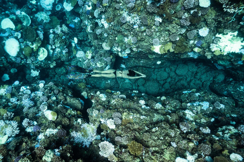 蘭嶼珊瑚白化
